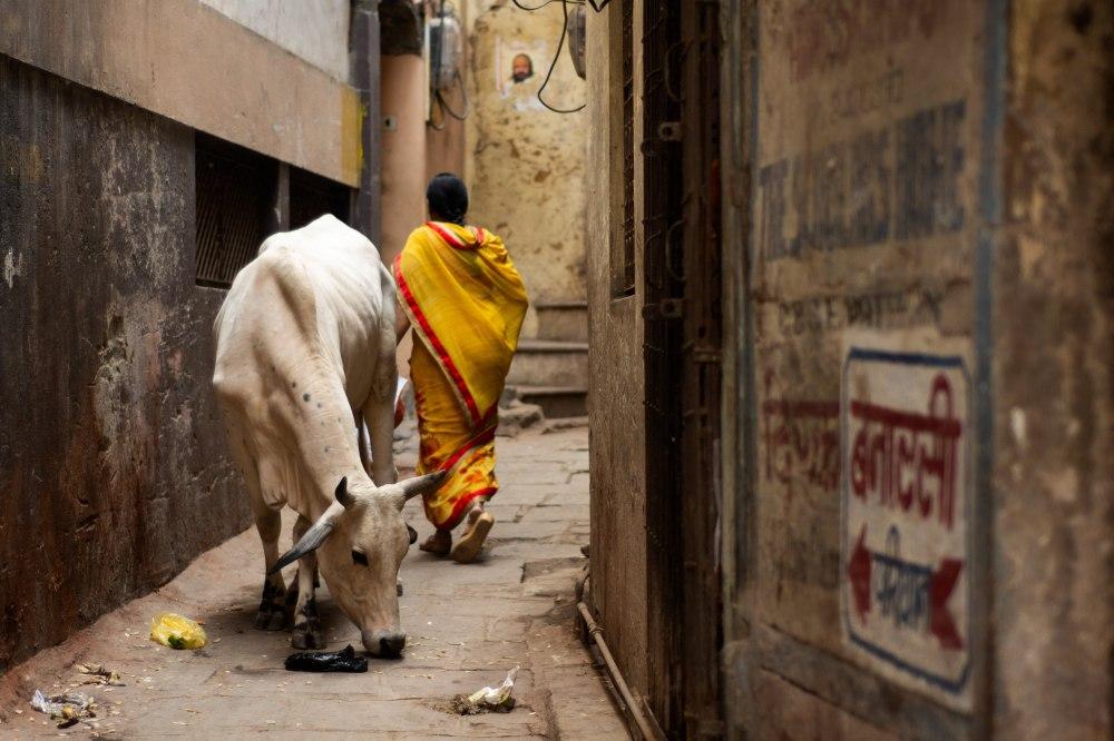 Varanasi (14)